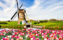catpic_niederlande.jpg